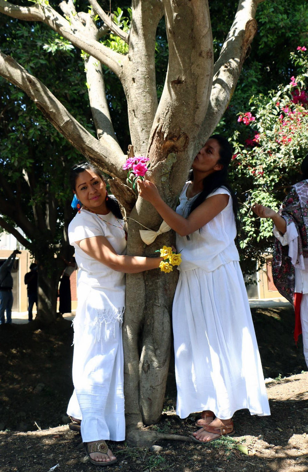 Массовая свадьба мексиканок с деревьями