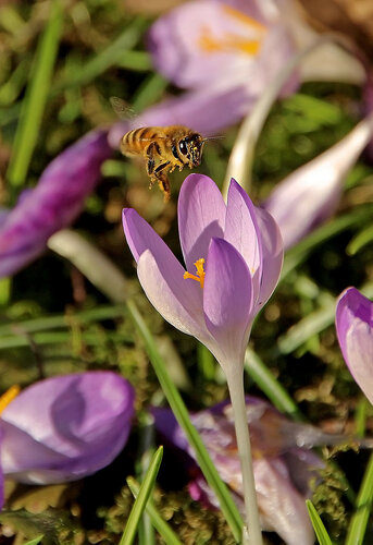 Первые пчёлки