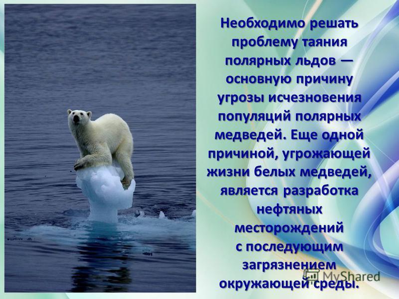 27 февраля Международный день полярного медведя. Медведь на льдинке