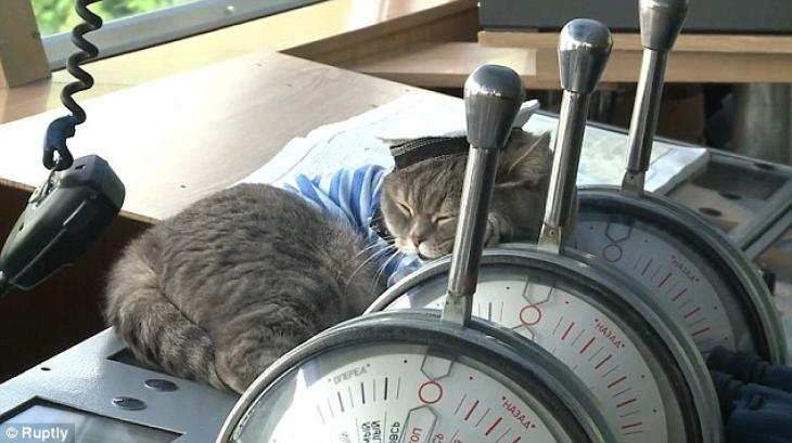 Боцман любит поваляться на капитанском мостике, наслаждаясь жизнью.