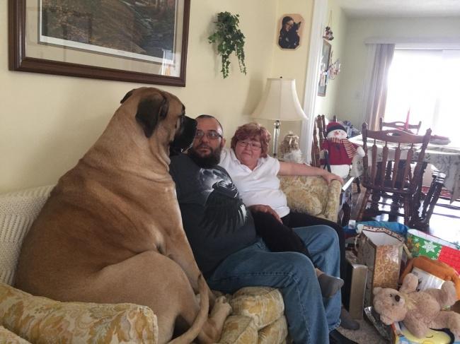© Neidermeyer519 / reddit.com      «Мой папа, кажется, неочень рад соседству»