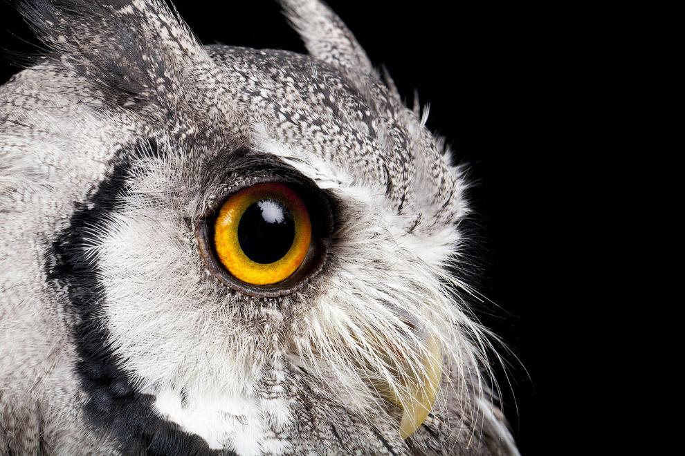 HD птицы Южная Америка полет европа сова совы роды