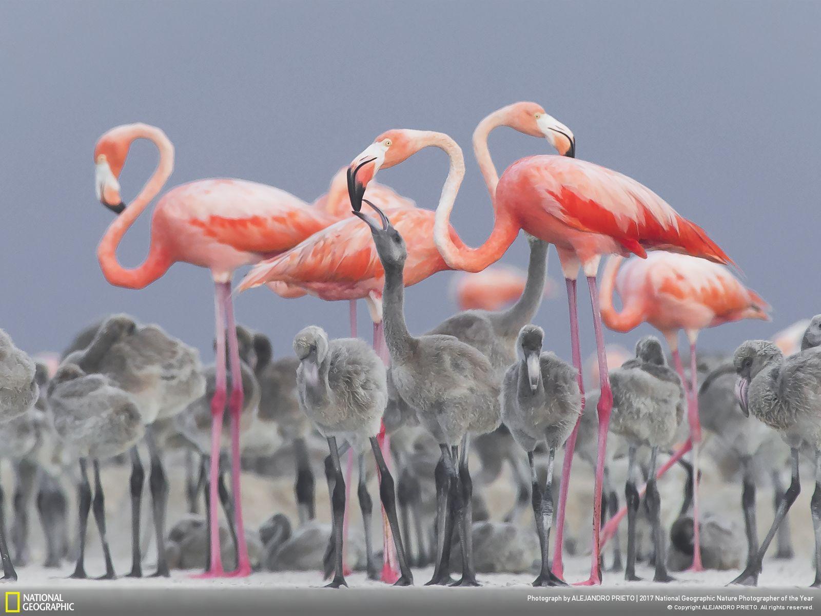 2nd Place, Wildlife. © Alejandro Prieto