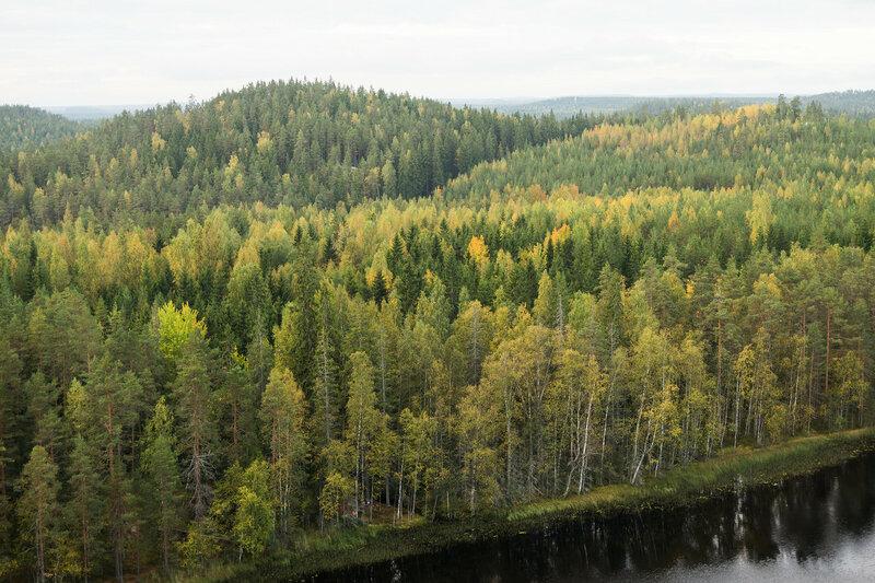 пейзаж осенью в парке Реповеси (Repovesi)