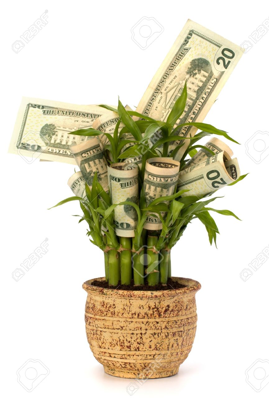 Всемирный день экономии. Денежное жерево