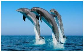 День Черного моря. Три дельфина в прыжке