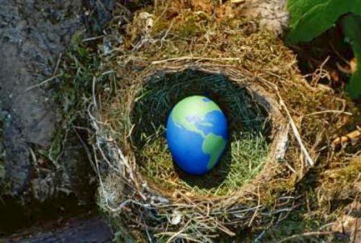 Всемирный день яйца. Яйцо-Земля в гнезде