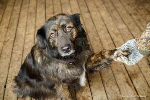 Нюра собака в добрые руки в москве фото