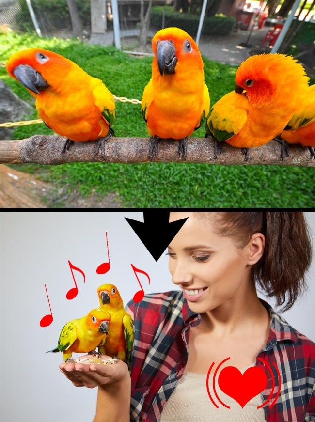 © depositphotos  © depositphotos     Птичьи трели успокаивают и  нормализуют сердц