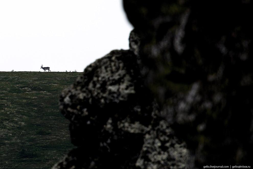 Четвёртое чудо России и перевал Дятлова