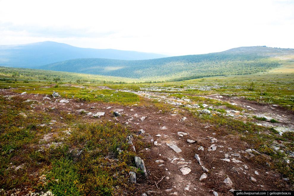 39. Кромка леса, возле деревьев которого пытались спастись некоторые туристы группы Дятлова.