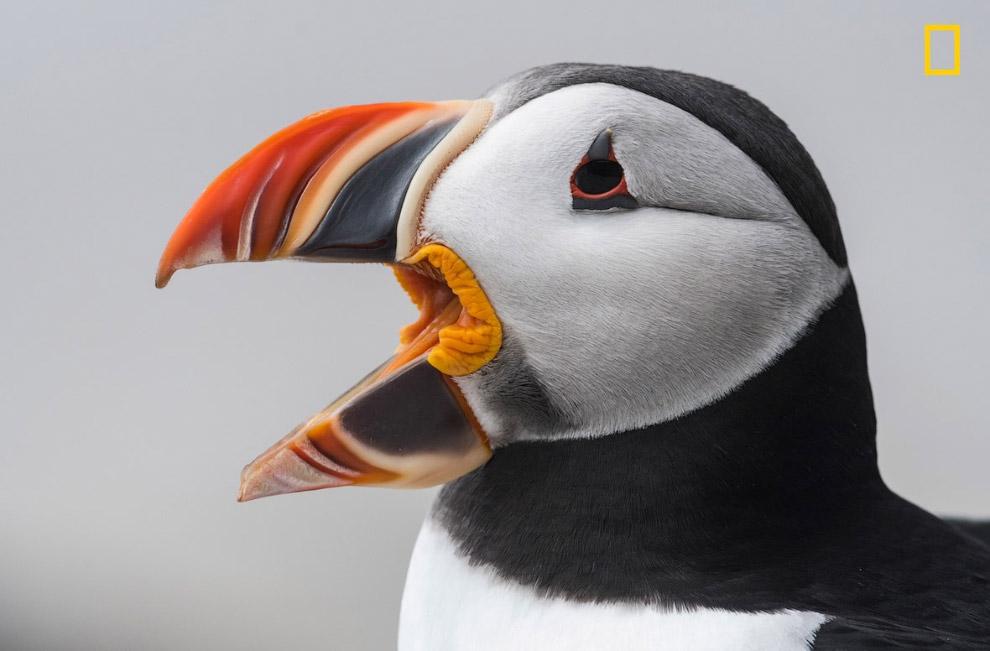 13. Болота в Латвии. (Фото Harry Collins | National Geographic Nature Photographer of the Year conte