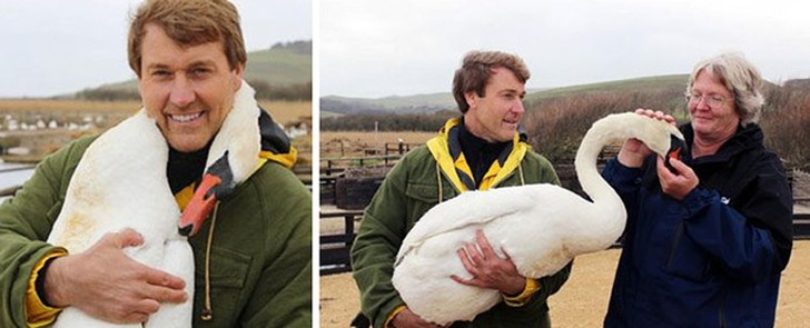 благодарность Великобритания заповедник лебеди птицы спасение телеведущие шея