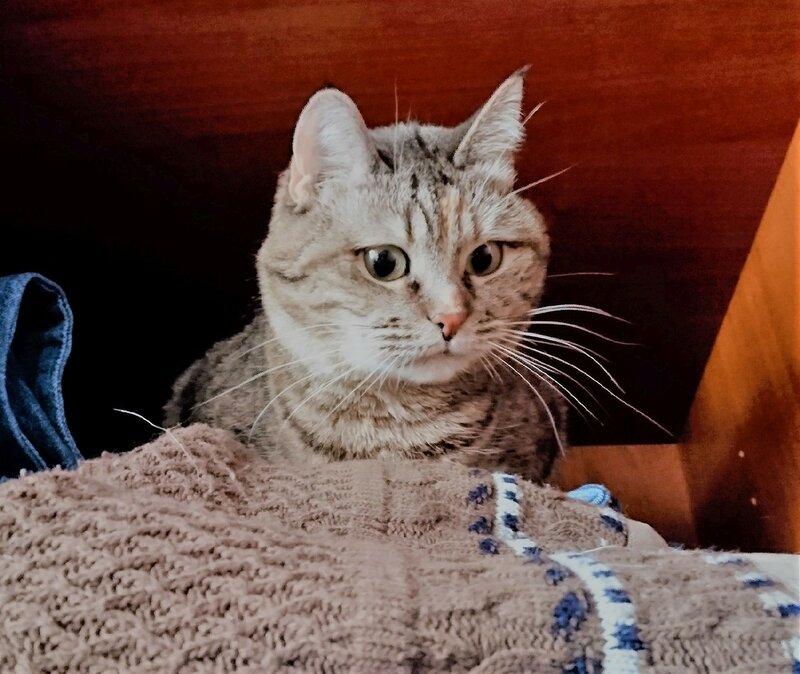 Джойка в шкафу на свитере обожаемого Главкота