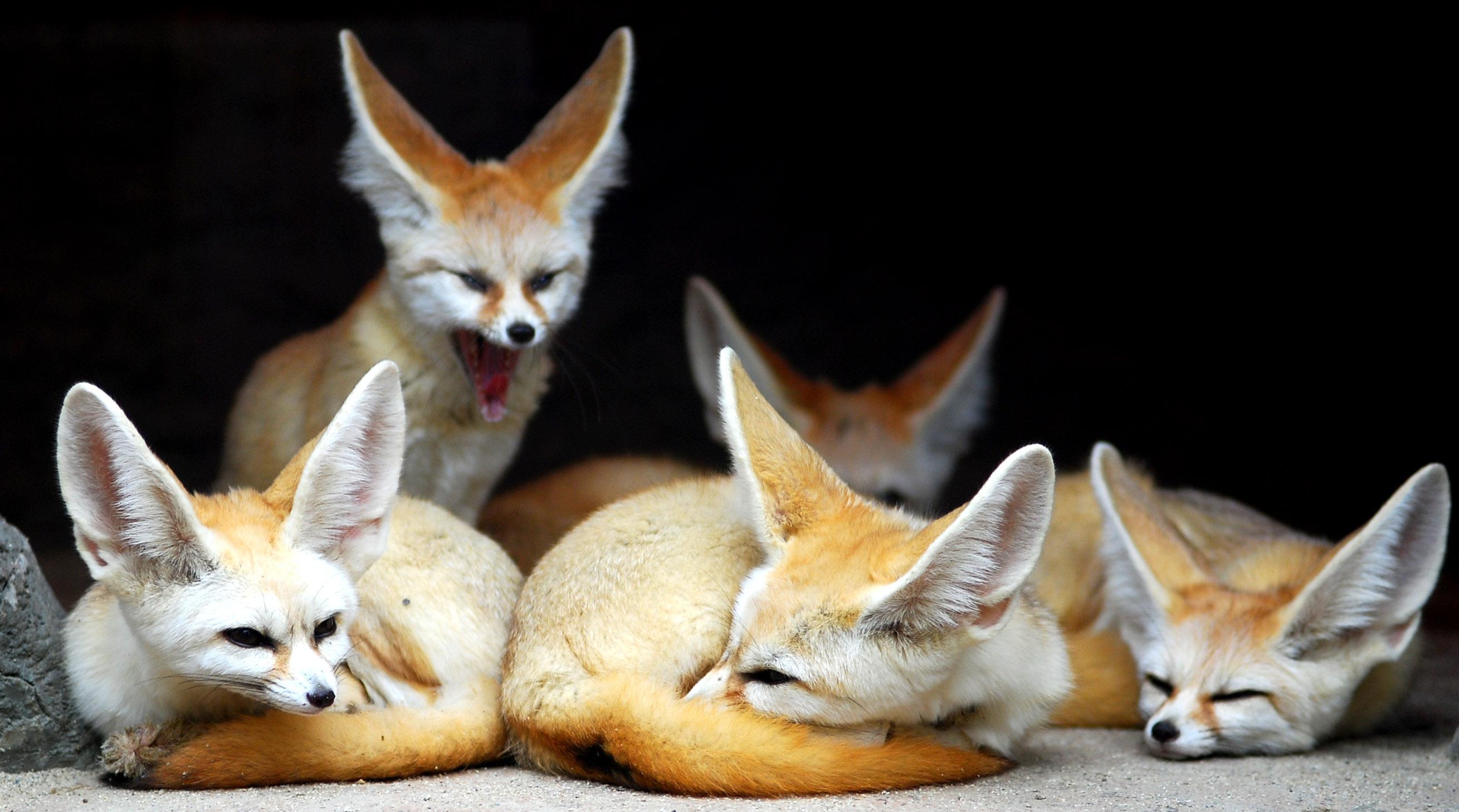 Приват записи лисичка