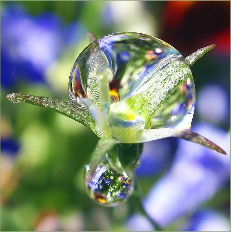 капсулы красивые картинки капелек росы так