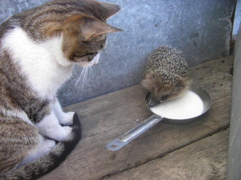 кто пьет молоко ловит мышей живет дома