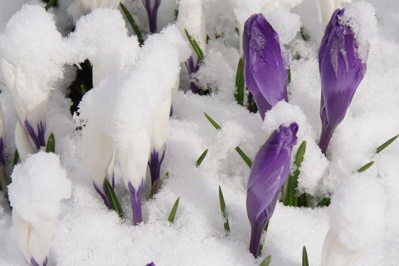 ожидание весны Трииночка