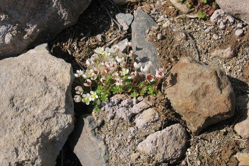Цветы на Дзензуре, Камчатка