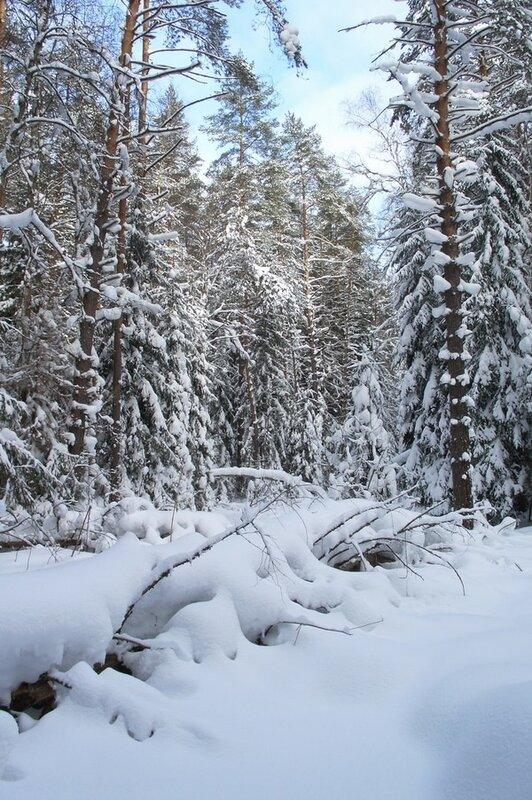 Под снежным одеялом