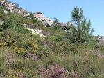 Вереск и колючки на холмах Жереша