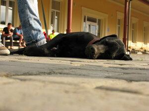 Адар - мила собачушка