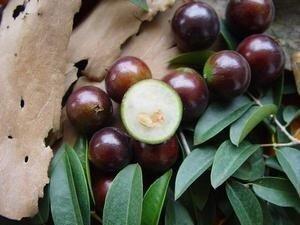 ...1-4 черными семенами.  Плод очень сладкий, его можно есть просто так...