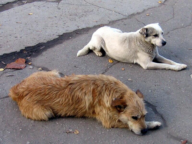 бездомные собаки в софии