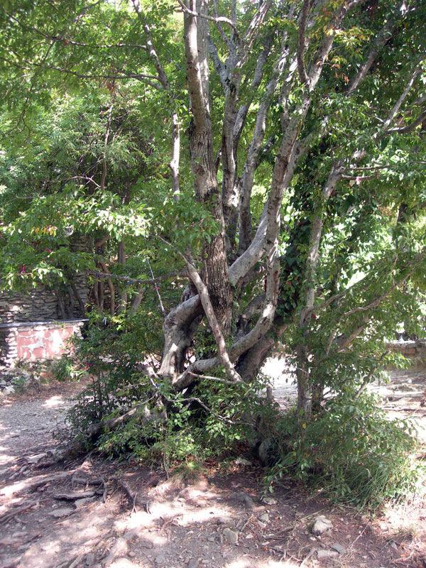 Дерево счастья, photo foto fotki history россия адлер сочи кавказ кавказские горы  орлиные скалы прометей титан миф фортуна древнегреческий бог пейзаж фото фотки апарышев