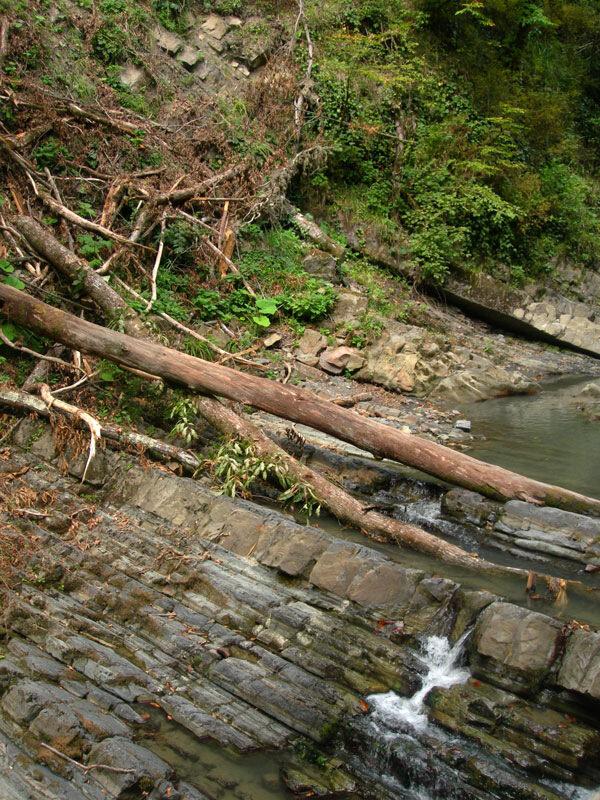 Стволы над водопадом, photo foto fotki history россия адлер сочи кавказ кавказские горы пейзаж фото фотки апарышев