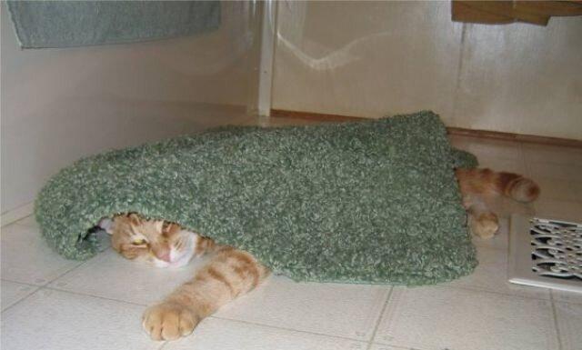 Из жизни одного кота