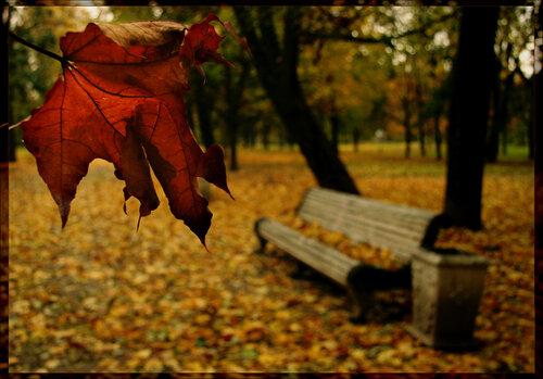 Осторожно, душа...листопад
