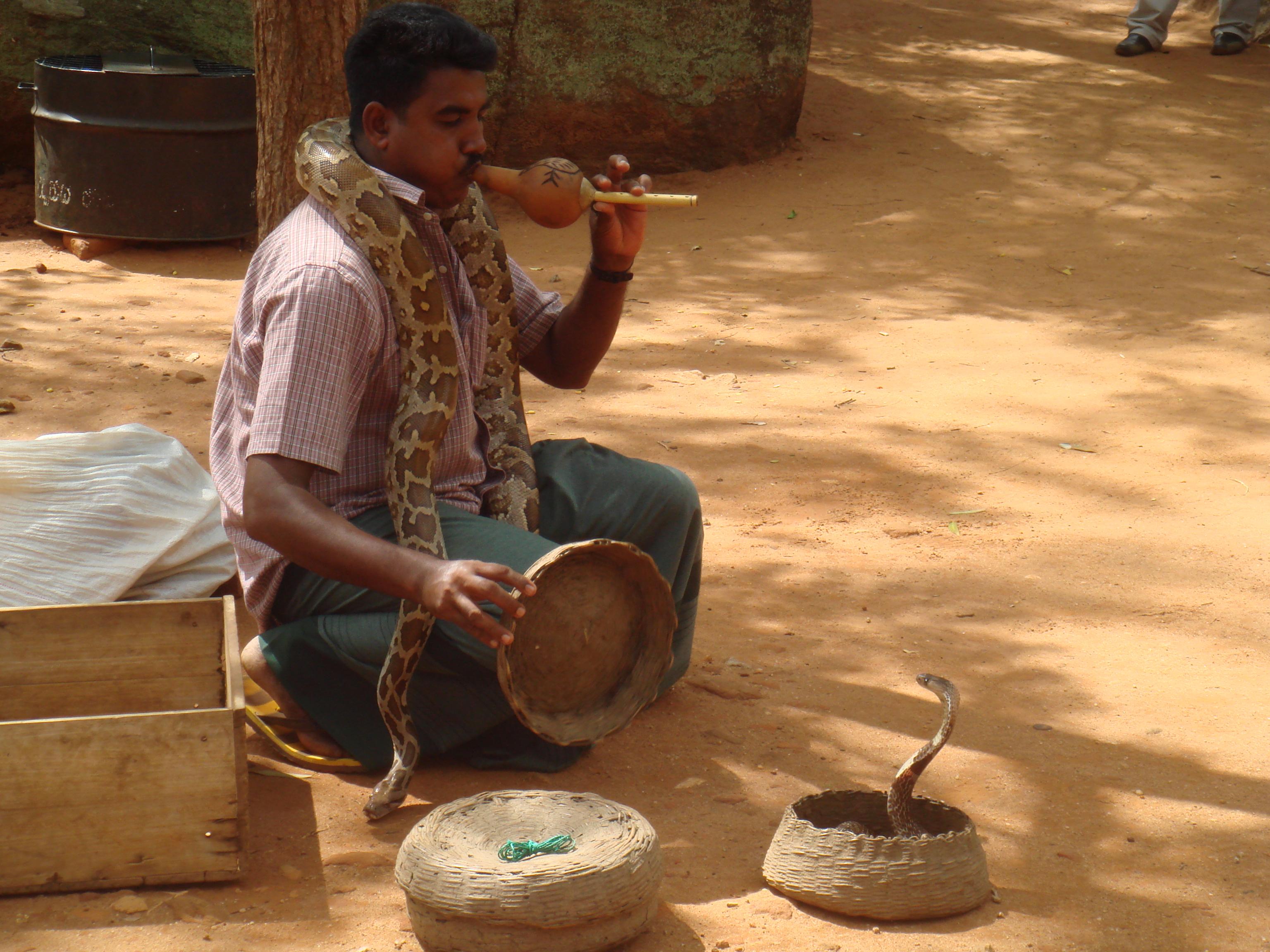 Музыкальный специалист по змеям :)