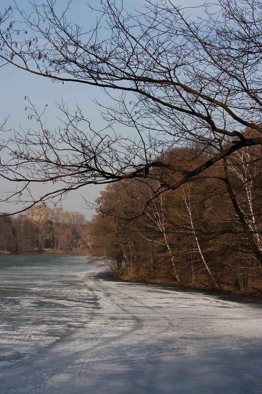 Пруд, тающий лед и ветви