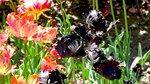 Цветы, деревья, кактусы, грибы
