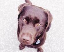 Исследование: собаки вызывают рак молочной железы