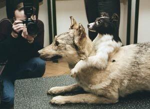 Слоновий передоз и двухголовая собака