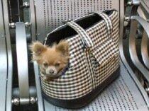 Соло для собаки с самолетом