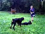 Девочки-садистки терроризуют собаководов и бездомных животных