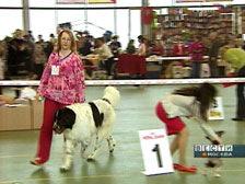 В Сокольниках прошла крупнейшая выставка собак