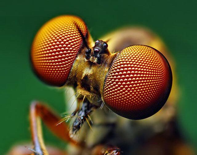 макро,насекомые