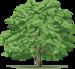 вектор дерево (16).png