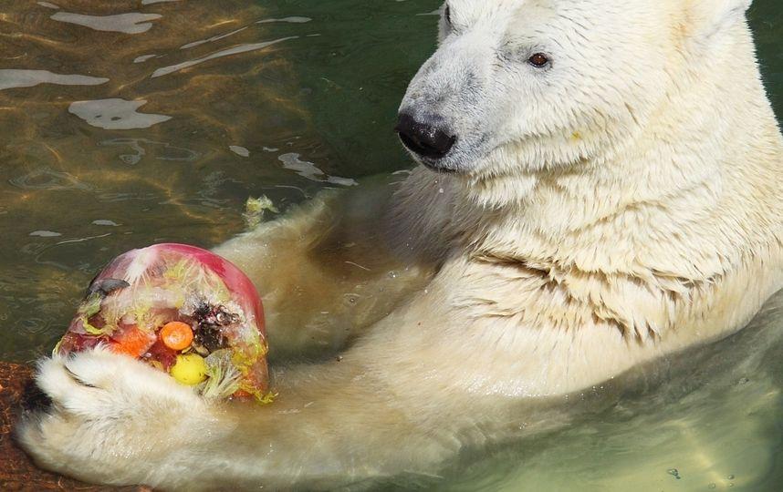 Медведица Услада отметила своё 30-летие в Ленинградском зоопарке