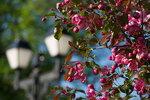 Цветение в Царицыно
