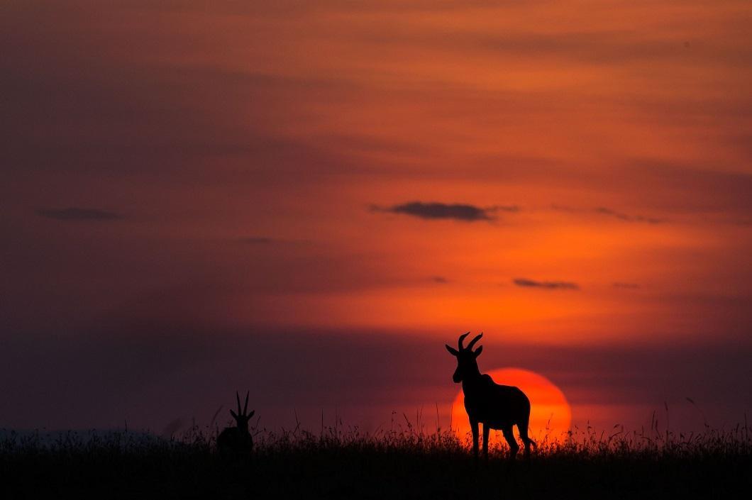 15. Закаты Масаи-Мара от Пола Гольдштейна впечатляют! (Фото: Пол Гольдштейн / Rex)