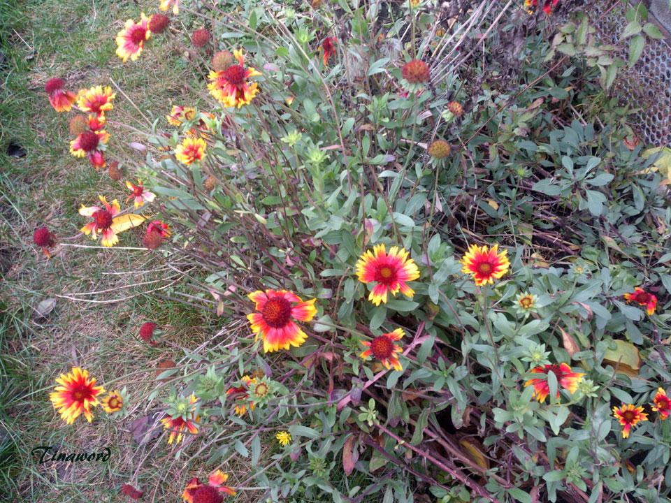 цветы-осени-54.jpg