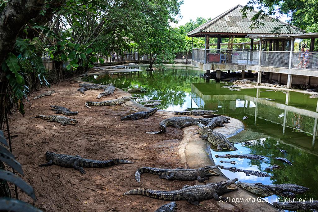 крокодиловая ферма в парке миллионолетних камней