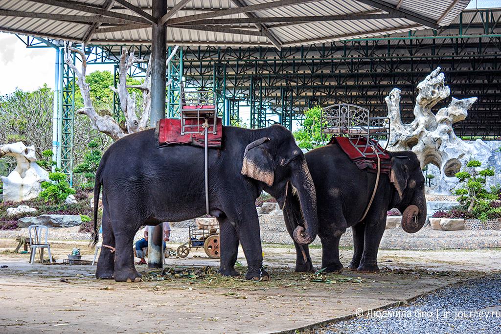 катание на слонах в парке камней