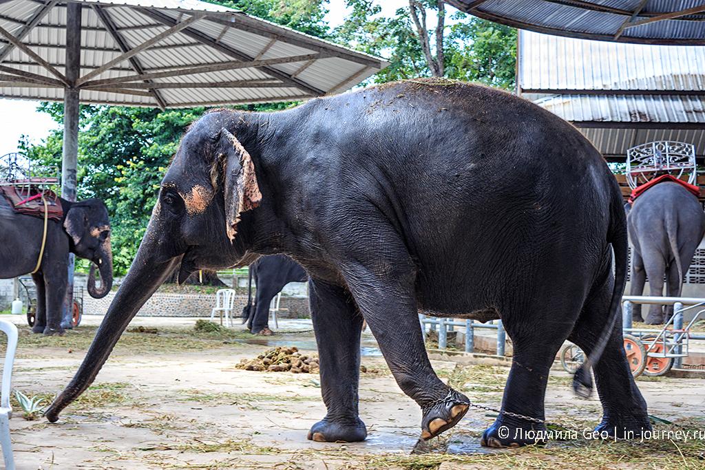 слон в парке древних камней