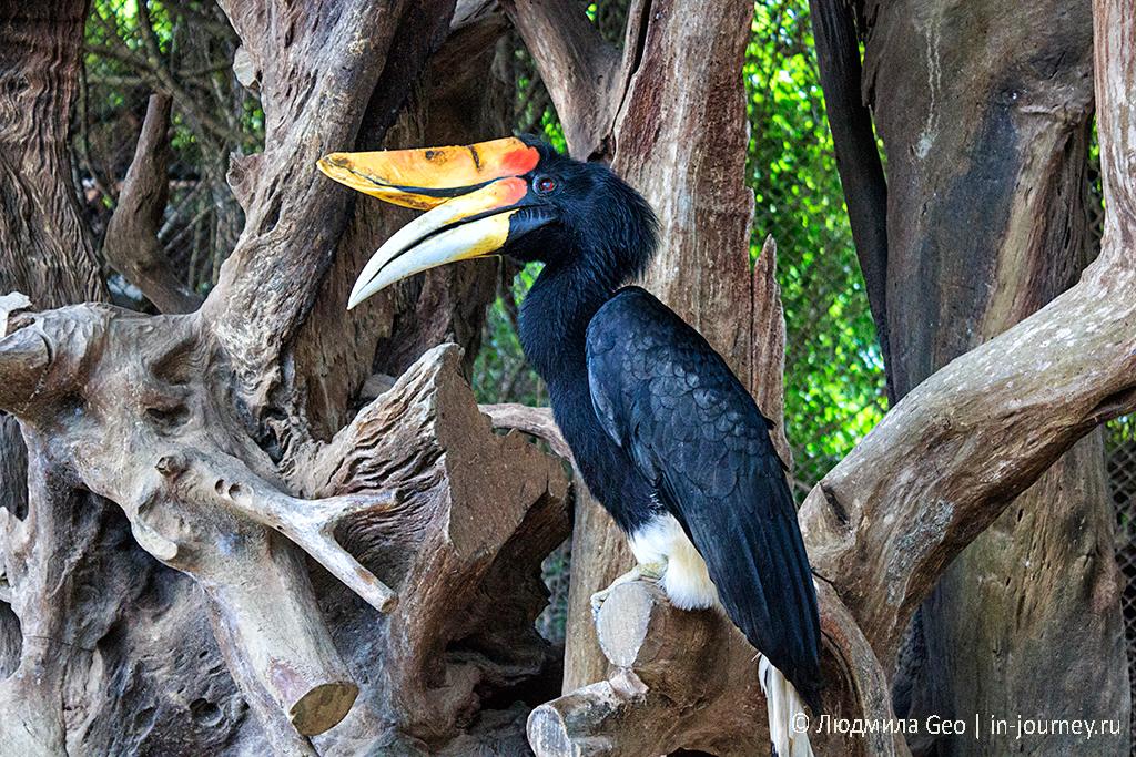 вольер с птицами в парке древних камней